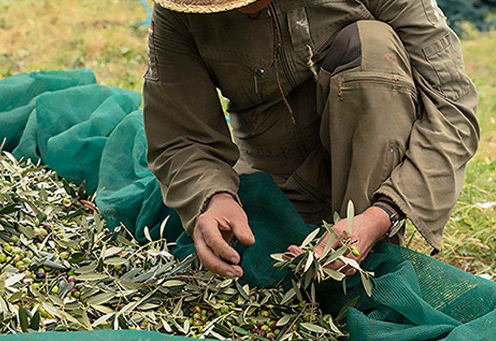 Investire nell'agroalimentare: ecco le misure previste dal PNRR per l'agroalimentare