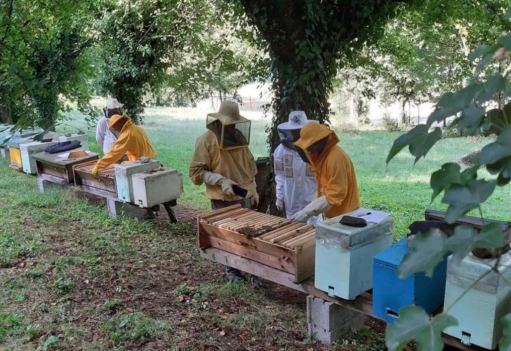 Apiamoci: un'apicoltura più sostenibile