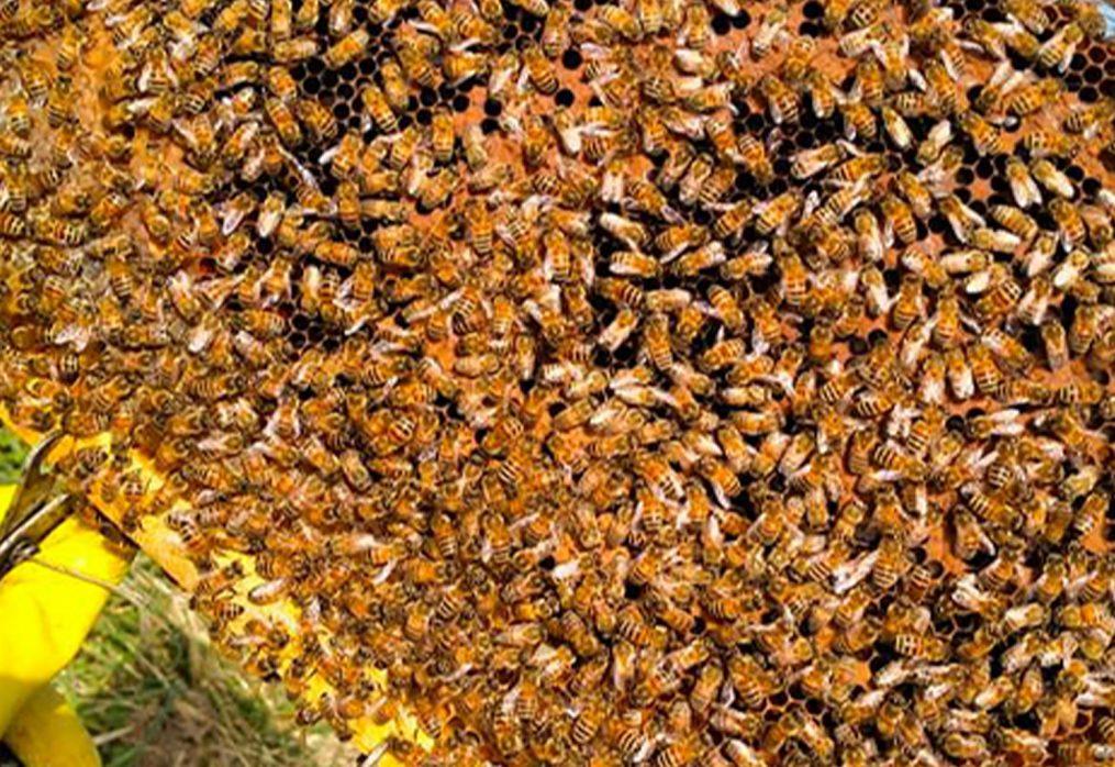 I borghi nella rete: Scarperia e il suo miele