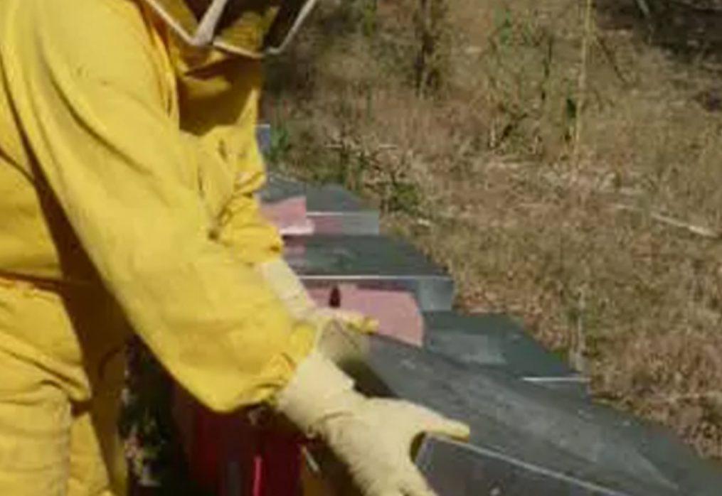Come stanno le api dei nostri coltivatori