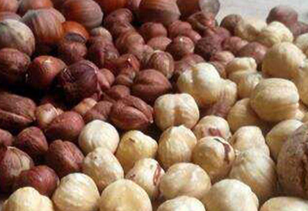 Tradizioni agricole: le nocciole del Piemonte