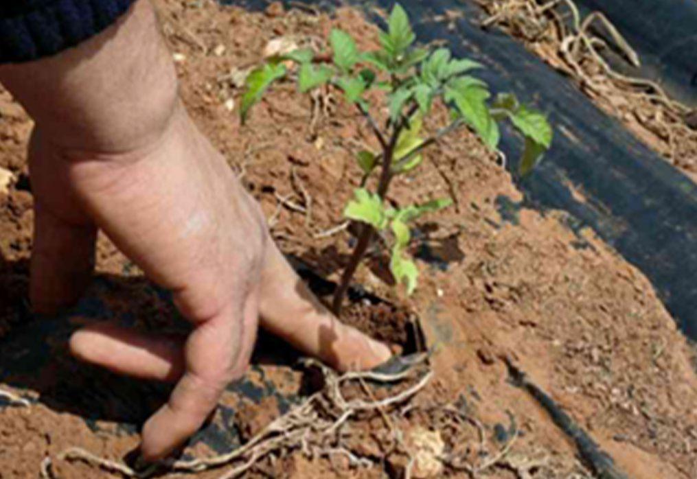 Agricoltura, la sostenibilità riporta in campo i giovani