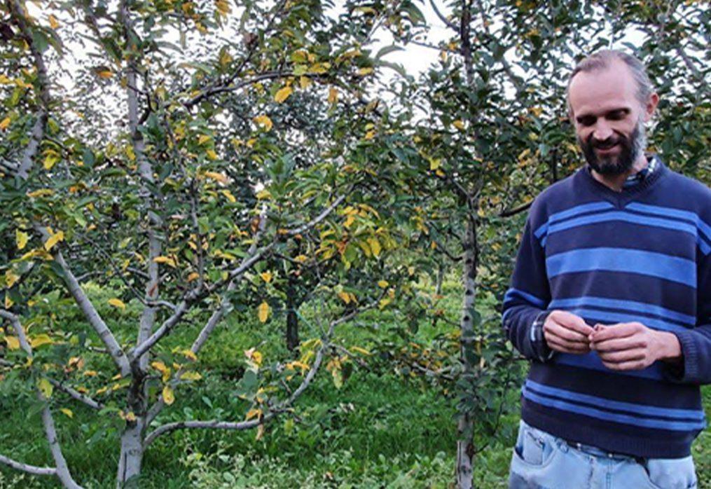 Le antiche varietà di mele: sapore e tradizione
