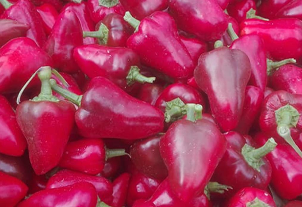 Il peperone: un dolce sapore della tradizione