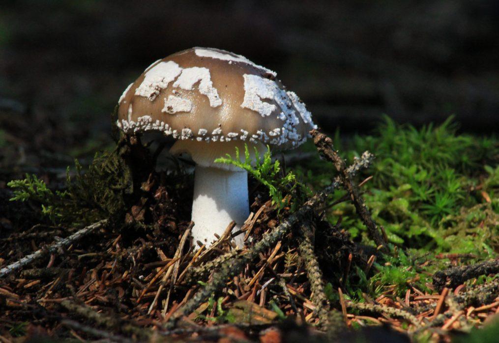 L'agricoltura che evolve, l'esempio dei funghi e delle formiche